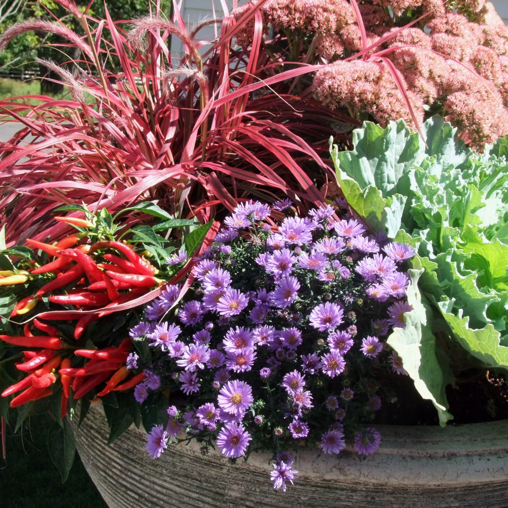 Fabulous fall flower planters the laurelrock company laurelrocks garden property manager colleen kinyon shares her favorite trends of the season izmirmasajfo