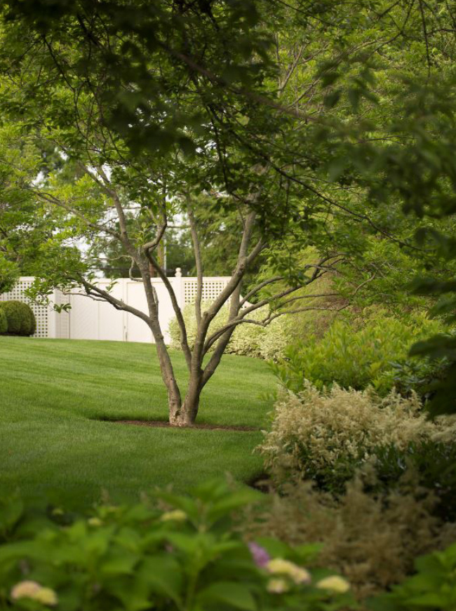 The LaurelRock Company - Residential Landscaping in CT - Green Farms - Trees