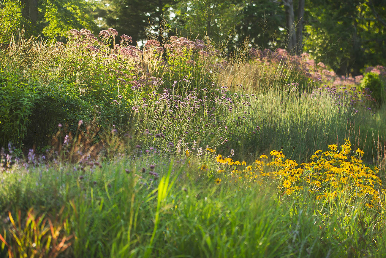 The LaurelRock Company - Residential Landscaping in Wilton CT - High Meadow Farm - Wildflower Meadow